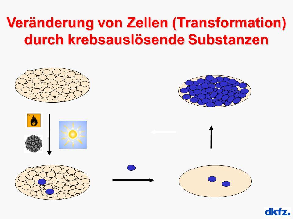 Veränderung von Zellen (Transformation) durch krebsauslösende Substanzen