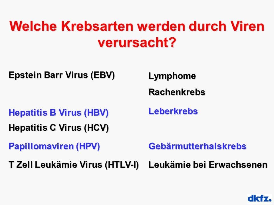 Welche Krebsarten werden durch Viren verursacht? Epstein Barr Virus (EBV) Hepatitis B Virus (HBV) Hepatitis C Virus (HCV) Papillomaviren (HPV) T Zell