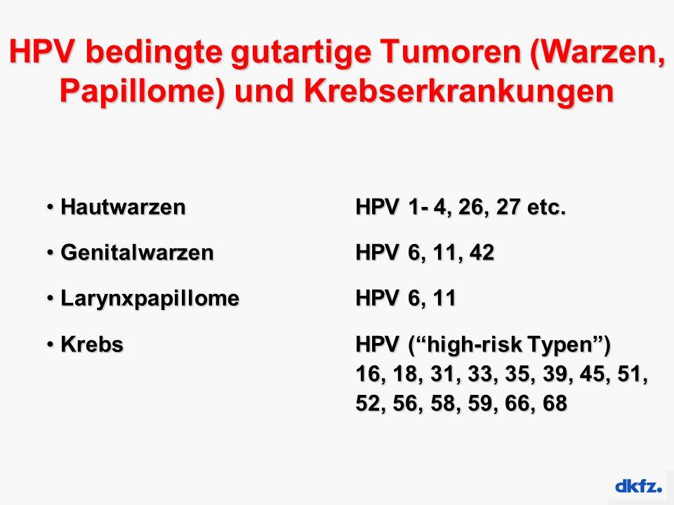 HPV bedingte gutartige Tumoren (Warzen, Papillome) und Krebserkrankungen Hautwarzen HPV 1- 4, 26, 27 etc. Hautwarzen HPV 1- 4, 26, 27 etc. Genitalwarz