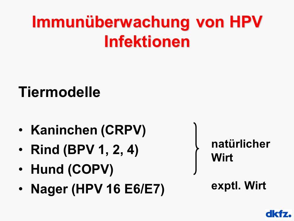 Tiermodelle Kaninchen (CRPV) Rind (BPV 1, 2, 4) Hund (COPV) Nager (HPV 16 E6/E7) natürlicher Wirt exptl. Wirt Immunüberwachung von HPV Infektionen