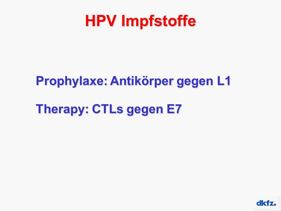 HPV Impfstoffe Prophylaxe: Antikörper gegen L1 Therapy: CTLs gegen E7