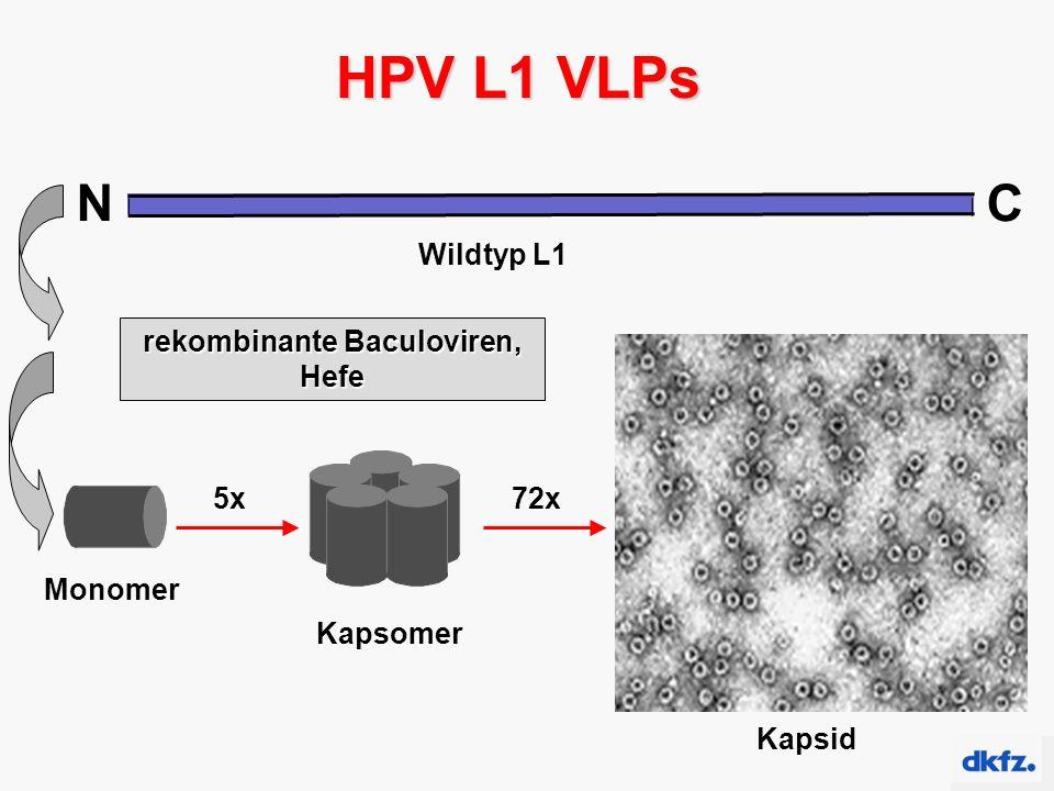 NC Wildtyp L1 HPV L1 VLPs Monomer Kapsomer 5x Kapsid 72x rekombinante Baculoviren, Hefe
