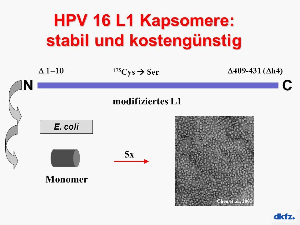 HPV 16 L1 Kapsomere: stabil und kostengünstig Kapsomer Monomer 5x NC modifiziertes L1  175 Cys  Ser  409-431  h4) E.
