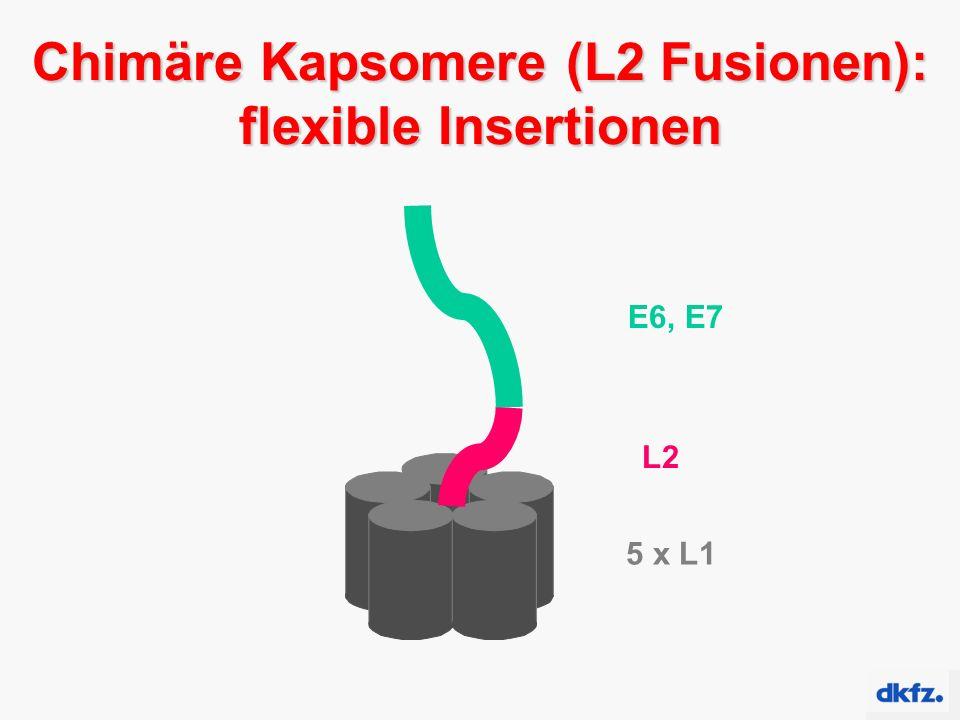 5 x L1 L2 E6, E7 Chimäre Kapsomere (L2 Fusionen): flexible Insertionen