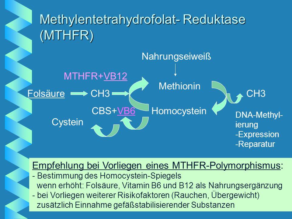 Methylentetrahydrofolat- Reduktase (MTHFR) Nahrungseiweiß Methionin Homocystein CH3 DNA-Methyl- ierung -Expression -Reparatur Cystein CBS+VB6 FolsäureCH3 MTHFR+VB12 Empfehlung bei Vorliegen eines MTHFR-Polymorphismus: - Bestimmung des Homocystein-Spiegels wenn erhöht: Folsäure, Vitamin B6 und B12 als Nahrungsergänzung - bei Vorliegen weiterer Risikofaktoren (Rauchen, Übergewicht) zusätzlich Einnahme gefäßstabilisierender Substanzen