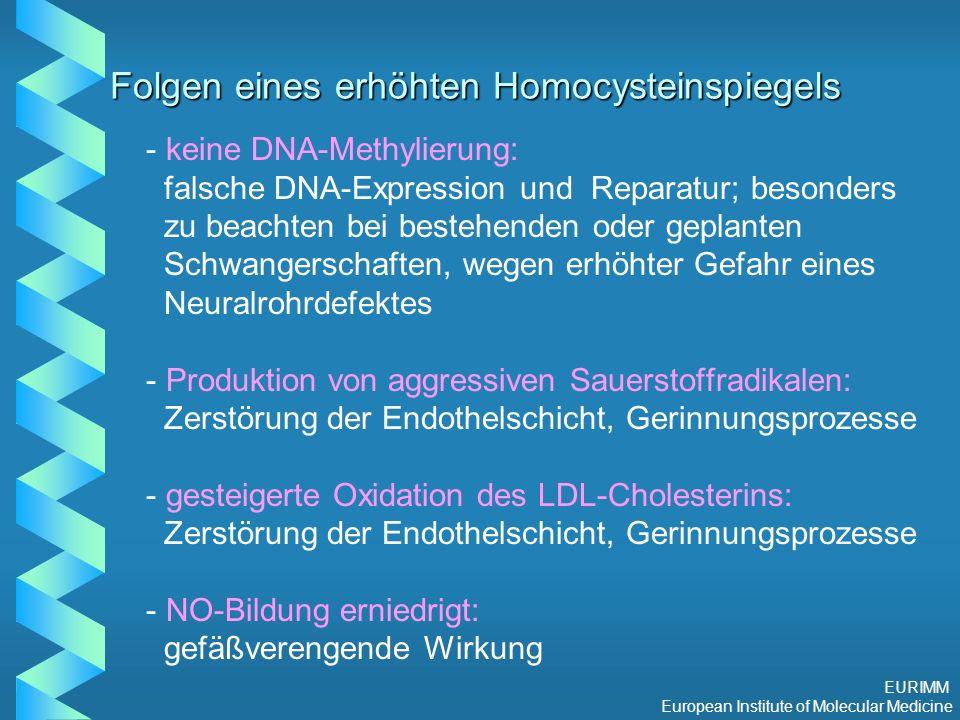 EURIMM European Institute of Molecular Medicine Folgen eines erhöhten Homocysteinspiegels - - keine DNA-Methylierung: falsche DNA-Expression und Reparatur; besonders zu beachten bei bestehenden oder geplanten Schwangerschaften, wegen erhöhter Gefahr eines Neuralrohrdefektes - - Produktion von aggressiven Sauerstoffradikalen: Zerstörung der Endothelschicht, Gerinnungsprozesse - - gesteigerte Oxidation des LDL-Cholesterins: Zerstörung der Endothelschicht, Gerinnungsprozesse - - NO-Bildung erniedrigt: gefäßverengende Wirkung