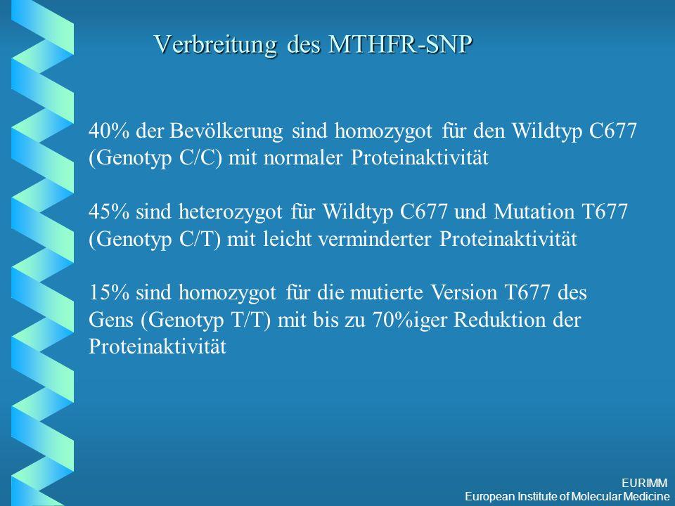 EURIMM European Institute of Molecular Medicine Verbreitung des MTHFR-SNP 40% der Bevölkerung sind homozygot für den Wildtyp C677 (Genotyp C/C) mit normaler Proteinaktivität 45% sind heterozygot für Wildtyp C677 und Mutation T677 (Genotyp C/T) mit leicht verminderter Proteinaktivität 15% sind homozygot für die mutierte Version T677 des Gens (Genotyp T/T) mit bis zu 70%iger Reduktion der Proteinaktivität