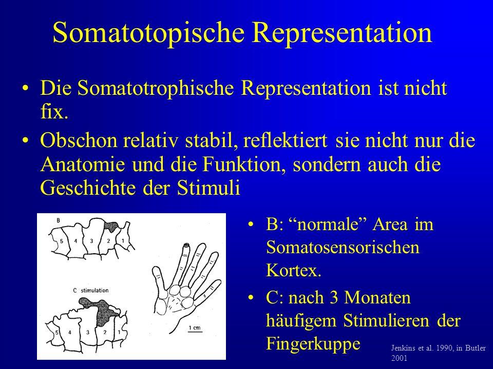 Somatotopische Representation Die Somatotrophische Representation ist nicht fix.