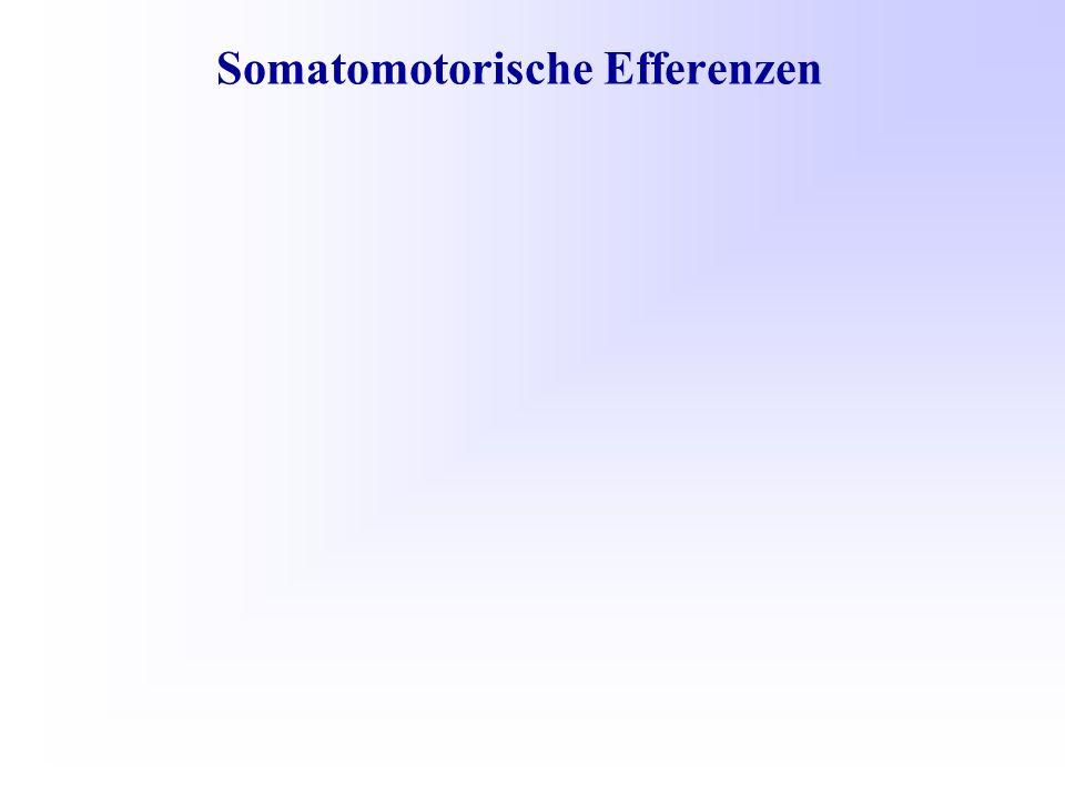 Somatomotorische Efferenzen