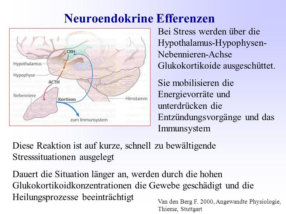 Neuroendokrine Efferenzen Bei Stress werden über die Hypothalamus-Hypophysen- Nebennieren-Achse Glukokortikoide ausgeschüttet.