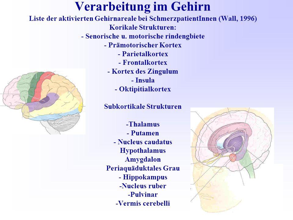 Verarbeitung im Gehirn Liste der aktivierten Gehirnareale bei SchmerzpatientInnen (Wall, 1996) Korikale Strukturen: - Senorische u.