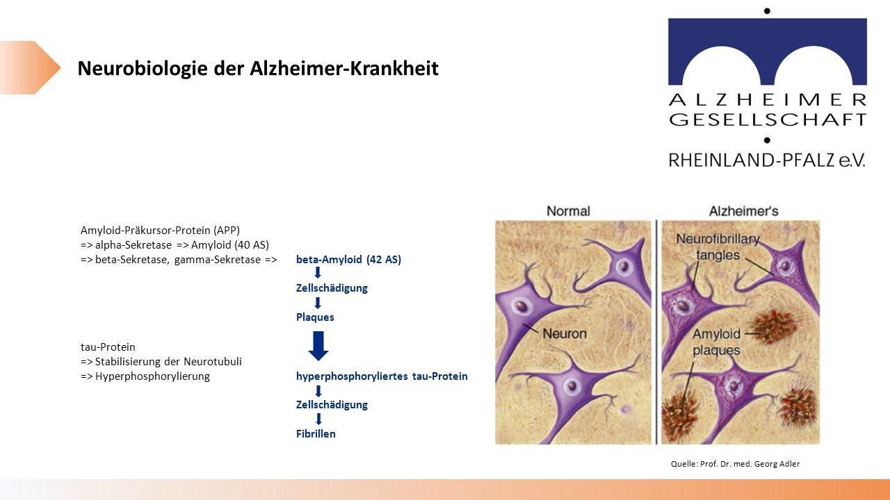 Neurobiologie der Alzheimer-Krankheit Amyloid-Präkursor-Protein (APP) => alpha-Sekretase => Amyloid (40 AS) => beta-Sekretase, gamma-Sekretase =>beta-Amyloid (42 AS) Zellschädigung Plaques tau-Protein => Stabilisierung der Neurotubuli => Hyperphosphorylierunghyperphosphoryliertes tau-Protein Zellschädigung Fibrillen