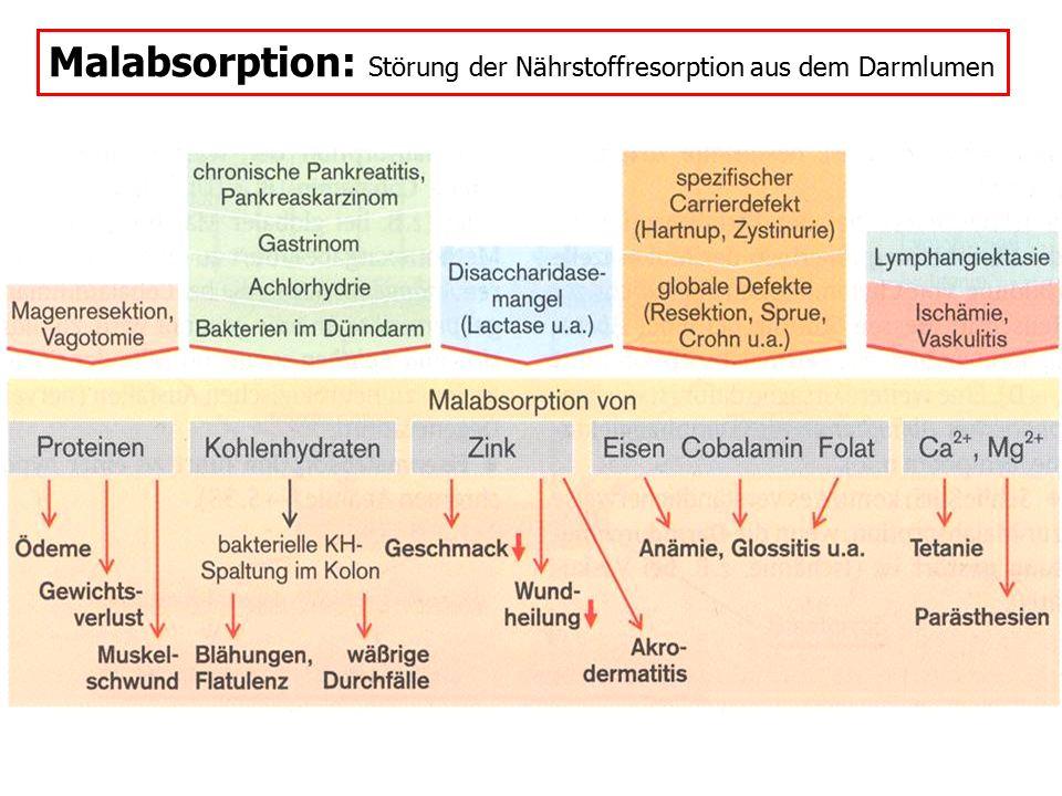 Malabsorption: Störung der Nährstoffresorption aus dem Darmlumen