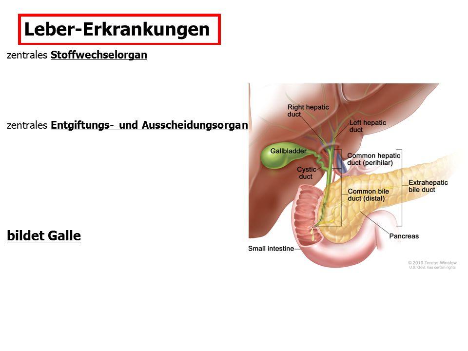 Galle Gallensäuren/salze: Gallenzusammensetzung