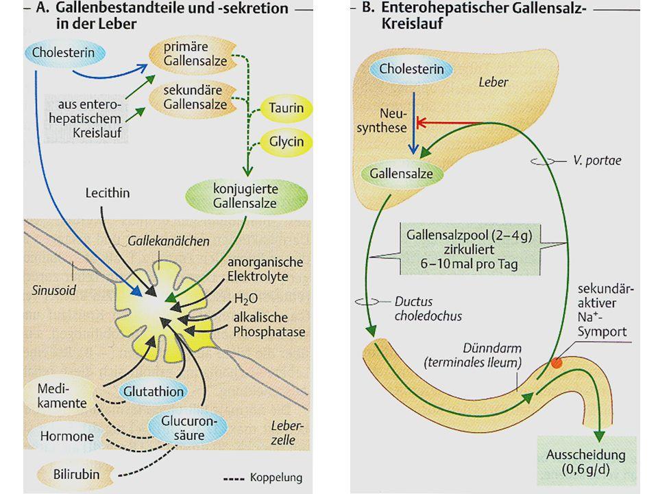 Chologene Diarrhoe Dünndarmüberwucherungssyndrom, SBOG = small bowel overgrowth syndrome Strahlentherapie zB nach Colonkarzinom-Entfernung Morbus Crohn