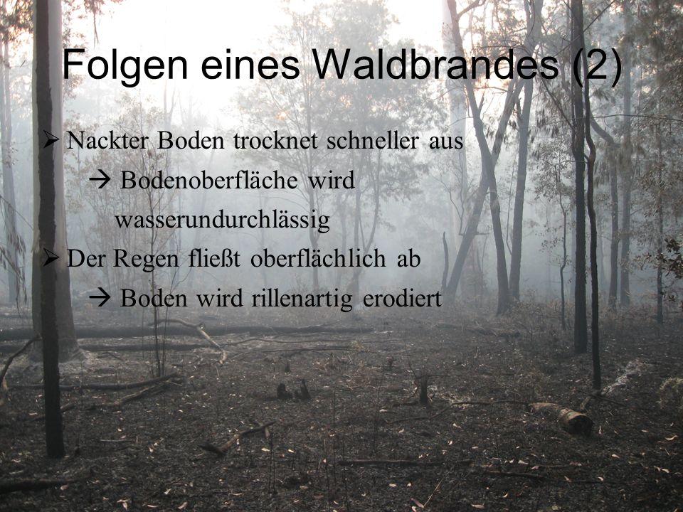 Folgen eines Waldbrandes (2)  Nackter Boden trocknet schneller aus  Bodenoberfläche wird wasserundurchlässig  Der Regen fließt oberflächlich ab  Boden wird rillenartig erodiert
