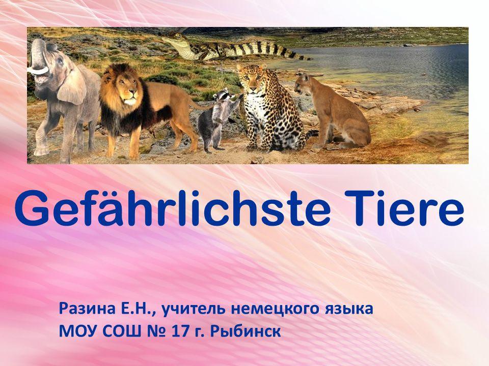 Gefährlichste Tiere Разина Е.Н., учитель немецкого языка МОУ СОШ № 17 г. Рыбинск