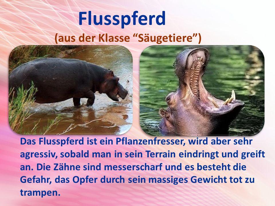 Flusspferd (aus der Klasse Säugetiere ) Das Flusspferd ist ein Pflanzenfresser, wird aber sehr agressiv, sobald man in sein Terrain eindringt und greift an.