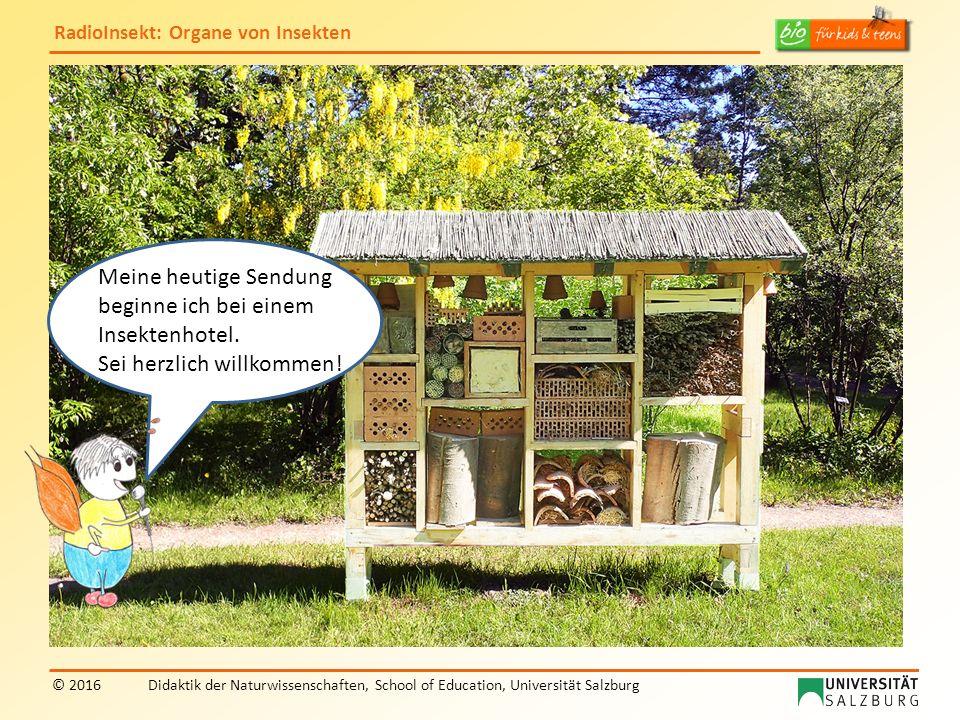 RadioInsekt: Organe von Insekten © 2016Didaktik der Naturwissenschaften, School of Education, Universität Salzburg Meine heutige Sendung beginne ich bei einem Insektenhotel.