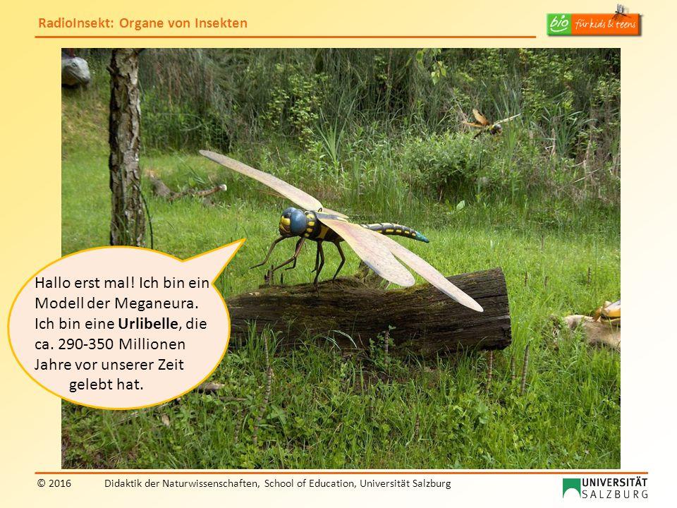 RadioInsekt: Organe von Insekten © 2016Didaktik der Naturwissenschaften, School of Education, Universität Salzburg Hallo erst mal! Ich bin ein Modell