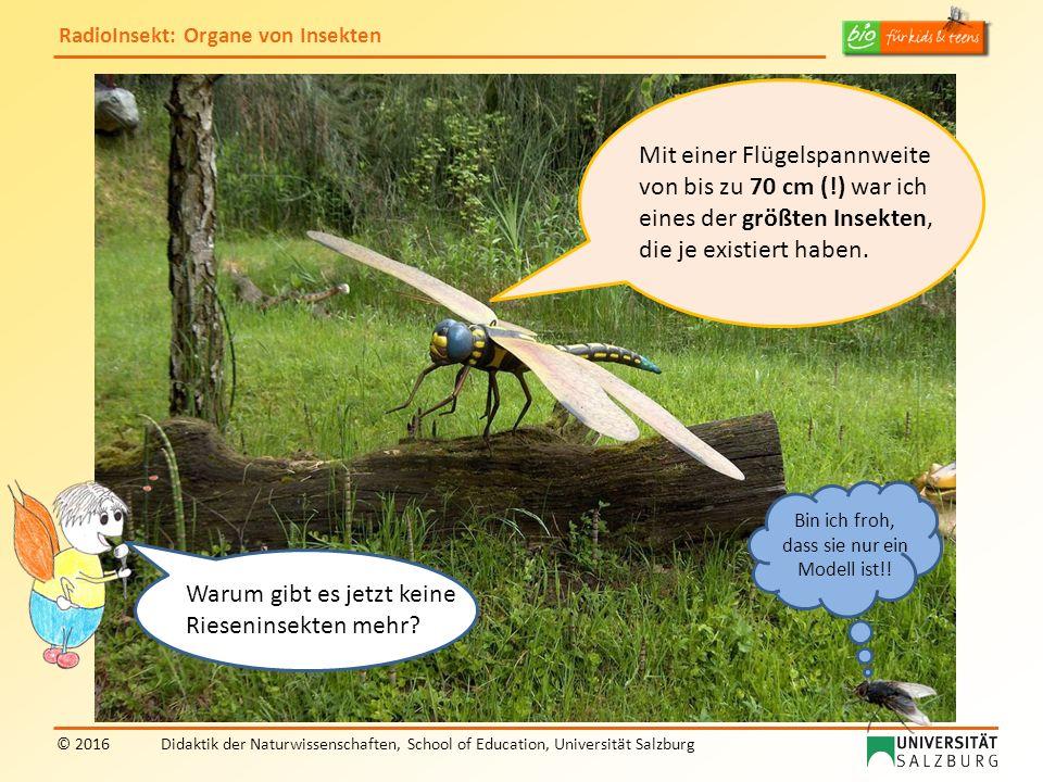 RadioInsekt: Organe von Insekten © 2016Didaktik der Naturwissenschaften, School of Education, Universität Salzburg Mit einer Flügelspannweite von bis zu 70 cm (!) war ich eines der größten Insekten, die je existiert haben.