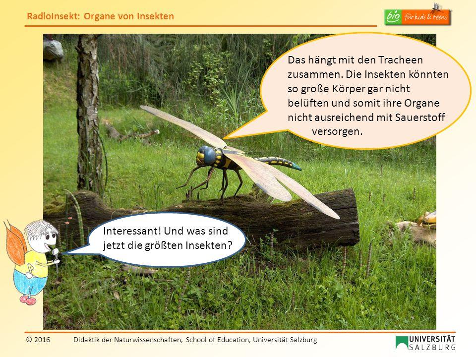 RadioInsekt: Organe von Insekten © 2016Didaktik der Naturwissenschaften, School of Education, Universität Salzburg Das hängt mit den Tracheen zusammen.