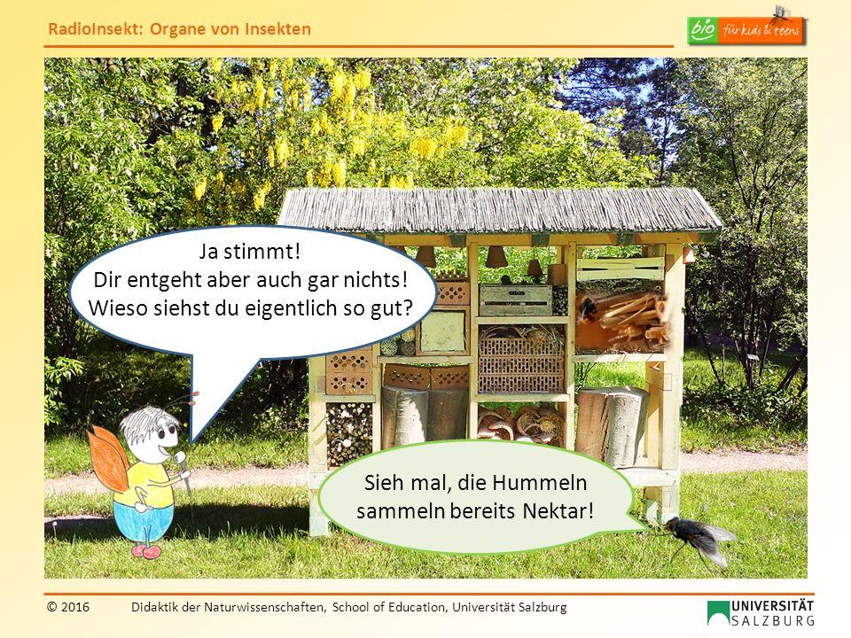 RadioInsekt: Organe von Insekten © 2016Didaktik der Naturwissenschaften, School of Education, Universität Salzburg Sieh mal, die Hummeln sammeln berei