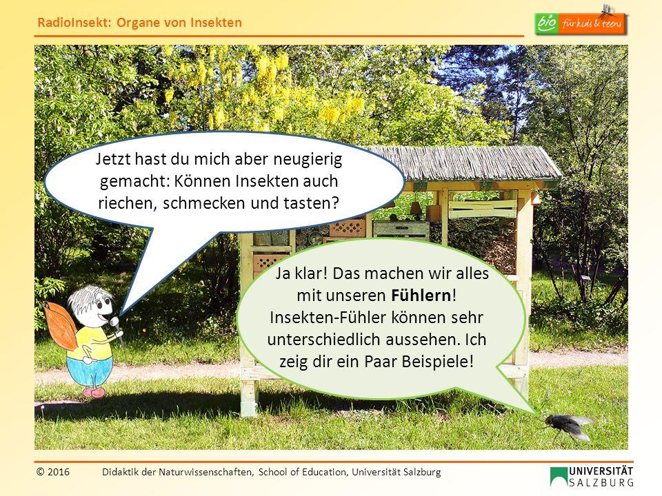 RadioInsekt: Organe von Insekten © 2016Didaktik der Naturwissenschaften, School of Education, Universität Salzburg Ja klar! Das machen wir alles mit u