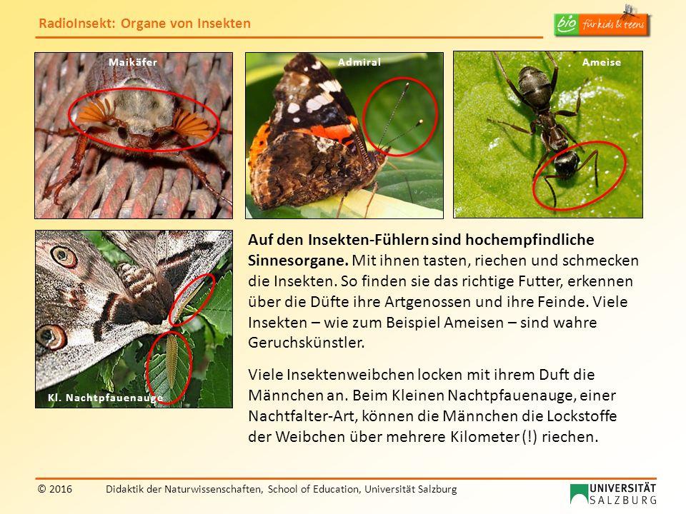 RadioInsekt: Organe von Insekten © 2016Didaktik der Naturwissenschaften, School of Education, Universität Salzburg MaikäferAdmiralAmeise Kl. Nachtpfau