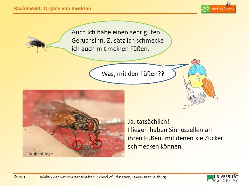 RadioInsekt: Organe von Insekten © 2016Didaktik der Naturwissenschaften, School of Education, Universität Salzburg Was, mit den Füßen?? Ja, tatsächlic
