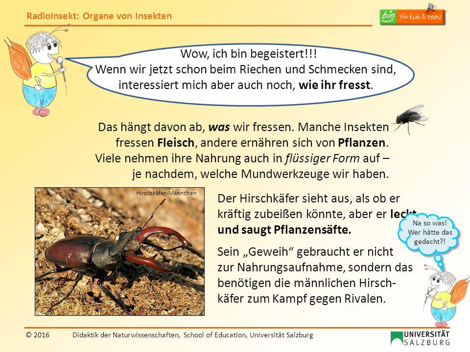 RadioInsekt: Organe von Insekten © 2016Didaktik der Naturwissenschaften, School of Education, Universität Salzburg Das hängt davon ab, was wir fressen.