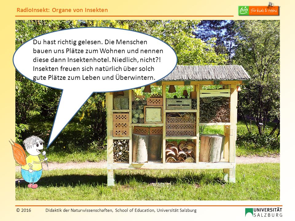 RadioInsekt: Organe von Insekten © 2016Didaktik der Naturwissenschaften, School of Education, Universität Salzburg Du hast richtig gelesen.