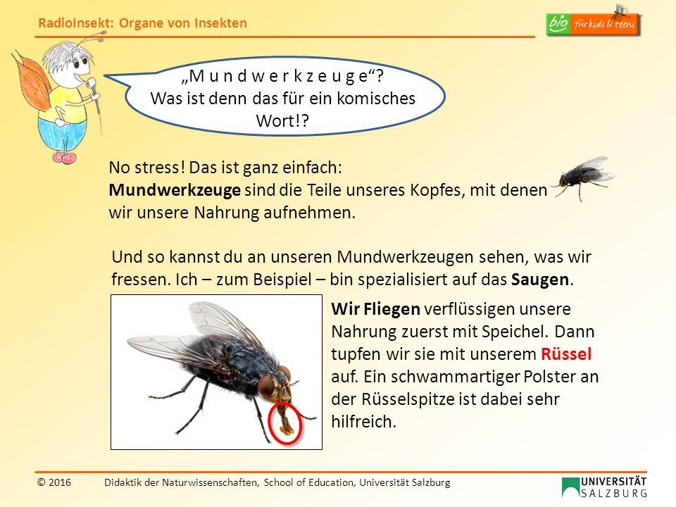 RadioInsekt: Organe von Insekten © 2016Didaktik der Naturwissenschaften, School of Education, Universität Salzburg No stress.