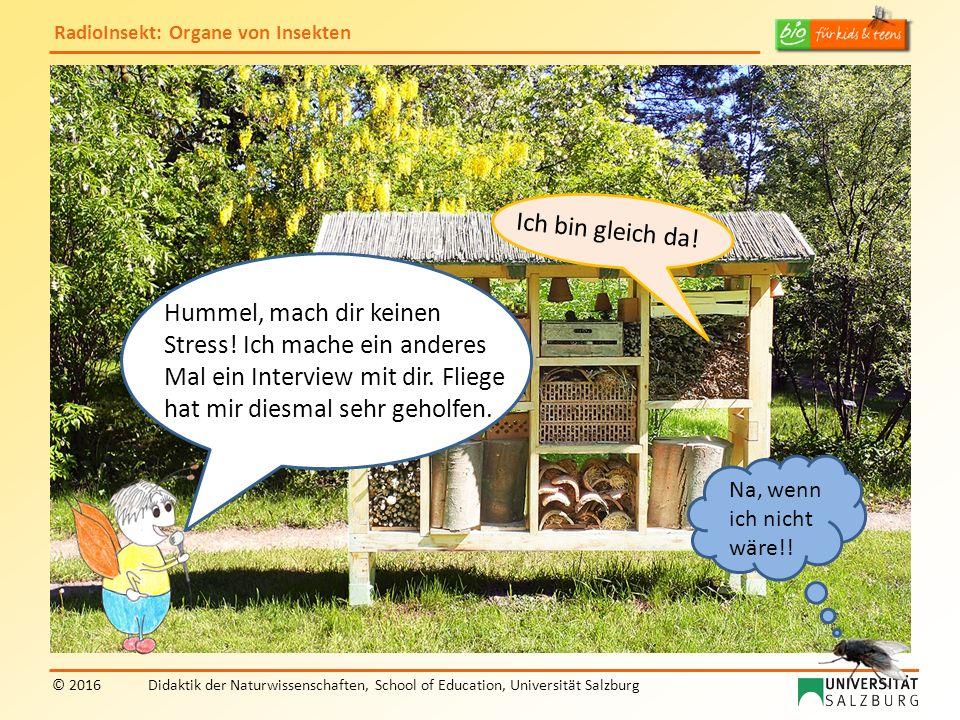 RadioInsekt: Organe von Insekten © 2016Didaktik der Naturwissenschaften, School of Education, Universität Salzburg Hummel, mach dir keinen Stress! Ich