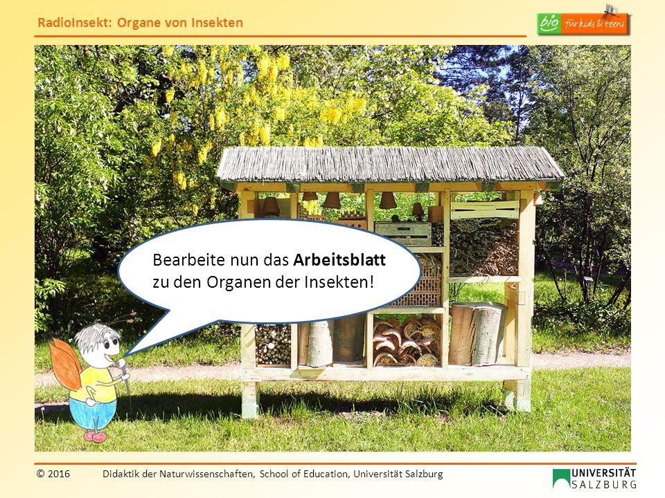 RadioInsekt: Organe von Insekten © 2016Didaktik der Naturwissenschaften, School of Education, Universität Salzburg Bearbeite nun das Arbeitsblatt zu den Organen der Insekten!
