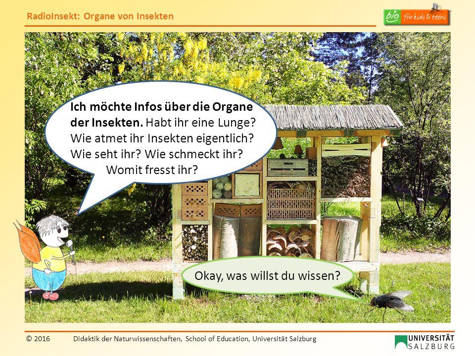 RadioInsekt: Organe von Insekten © 2016Didaktik der Naturwissenschaften, School of Education, Universität Salzburg Okay, was willst du wissen? Ich möc