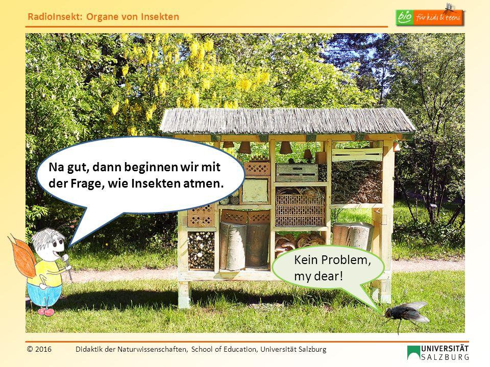 RadioInsekt: Organe von Insekten © 2016Didaktik der Naturwissenschaften, School of Education, Universität Salzburg Kein Problem, my dear! Na gut, dann