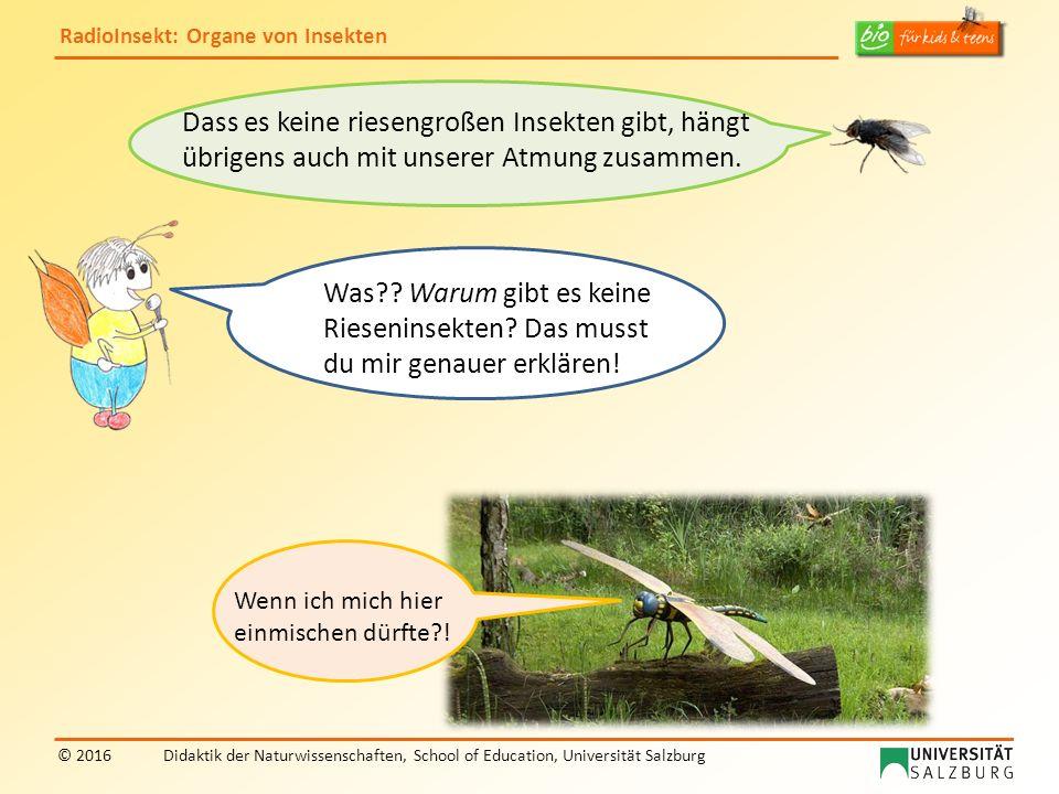 RadioInsekt: Organe von Insekten © 2016Didaktik der Naturwissenschaften, School of Education, Universität Salzburg Dass es keine riesengroßen Insekten gibt, hängt übrigens auch mit unserer Atmung zusammen.