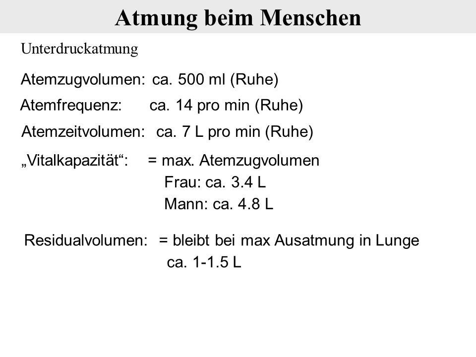 """Unterdruckatmung Atmung beim Menschen Atemzugvolumen: ca. 500 ml (Ruhe) Atemfrequenz: ca. 14 pro min (Ruhe) Atemzeitvolumen: ca. 7 L pro min (Ruhe) """"V"""