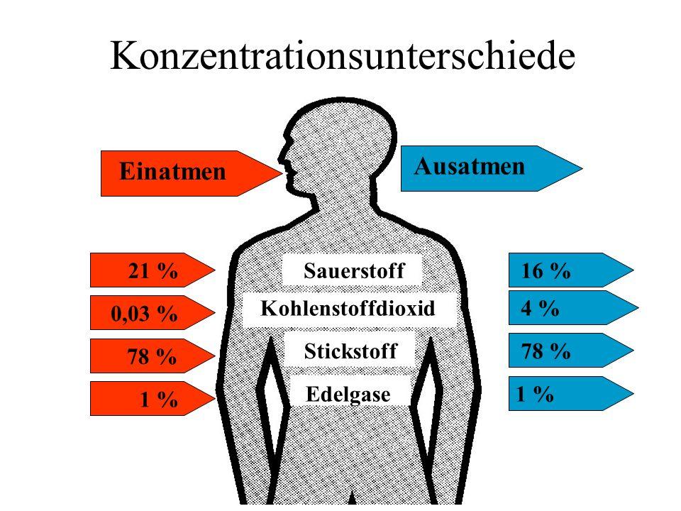 Konzentrationsunterschiede Sauerstoff Kohlenstoffdioxid Stickstoff Edelgase 21 %16 % 0,03 % 4 % 78 % 1 % 78 % Einatmen Ausatmen