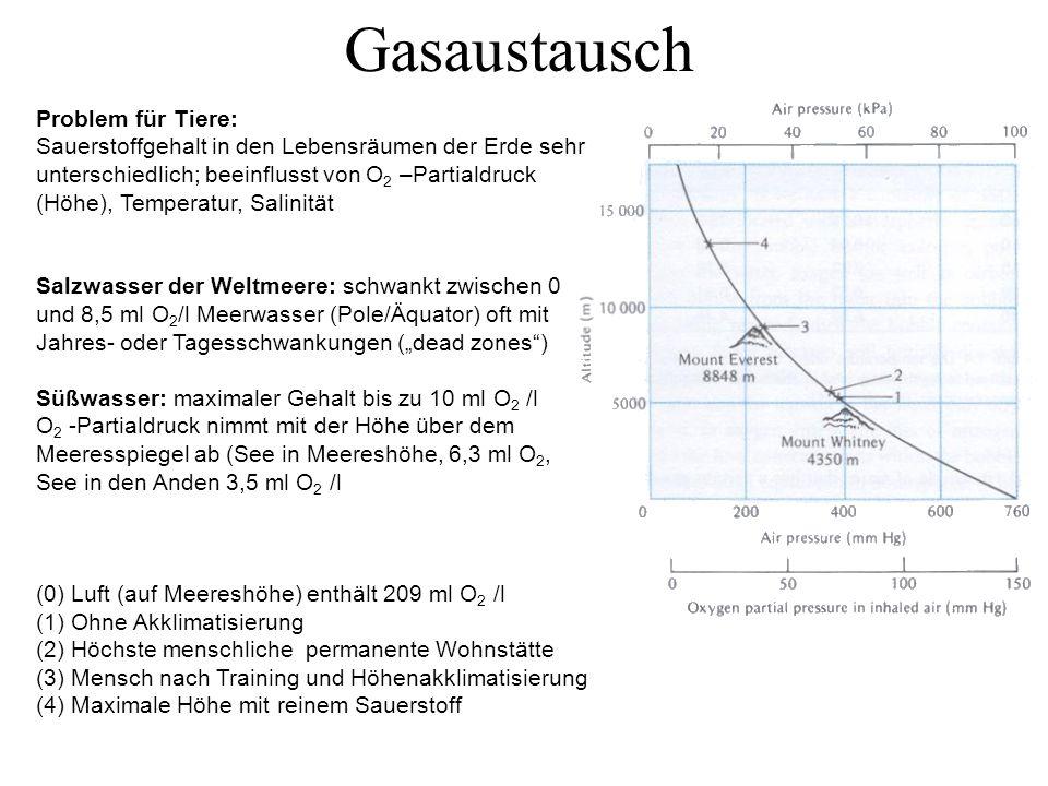 """Problem für Tiere: Sauerstoffgehalt in den Lebensräumen der Erde sehr unterschiedlich; beeinflusst von O 2 –Partialdruck (Höhe), Temperatur, Salinität Salzwasser der Weltmeere: schwankt zwischen 0 und 8,5 ml O 2 /l Meerwasser (Pole/Äquator) oft mit Jahres- oder Tagesschwankungen (""""dead zones ) Süßwasser: maximaler Gehalt bis zu 10 ml O 2 /l O 2 -Partialdruck nimmt mit der Höhe über dem Meeresspiegel ab (See in Meereshöhe, 6,3 ml O 2, See in den Anden 3,5 ml O 2 /l (0) Luft (auf Meereshöhe) enthält 209 ml O 2 /l (1) Ohne Akklimatisierung (2) Höchste menschliche permanente Wohnstätte (3) Mensch nach Training und Höhenakklimatisierung (4) Maximale Höhe mit reinem Sauerstoff Gasaustausch"""