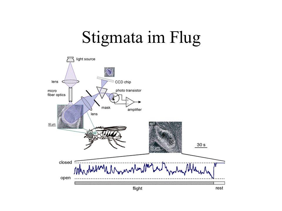 Stigmata im Flug