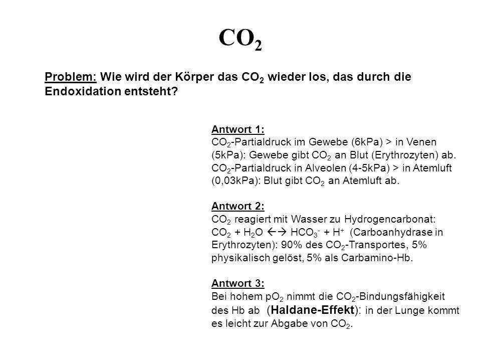CO 2 Problem: Wie wird der Körper das CO 2 wieder los, das durch die Endoxidation entsteht? Antwort 1: CO 2 -Partialdruck im Gewebe (6kPa) > in Venen