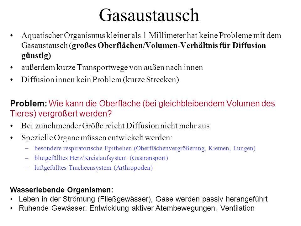 Gasdrüse der Fische (Schwimmblase) (Fische) (Säuger) www.ksu.edu and www.scienceisart.com Laktat
