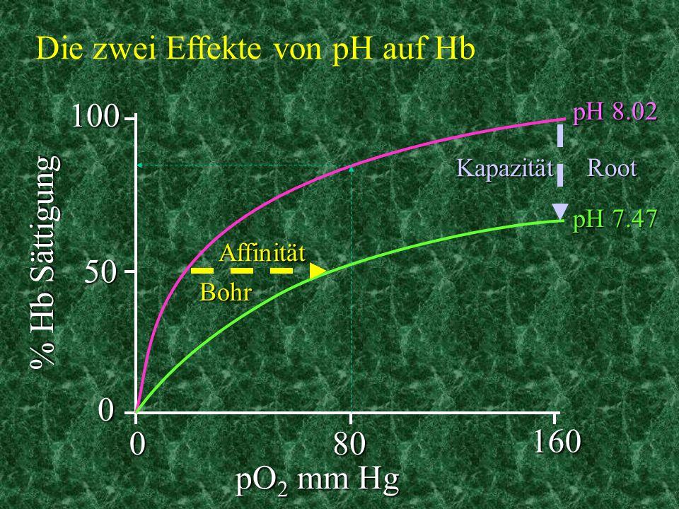080160 010050 pO 2 mm Hg % Hb Sättigung pH 8.02 pH 7.47 Affinität Kapazität Bohr Root Die zwei Effekte von pH auf Hb