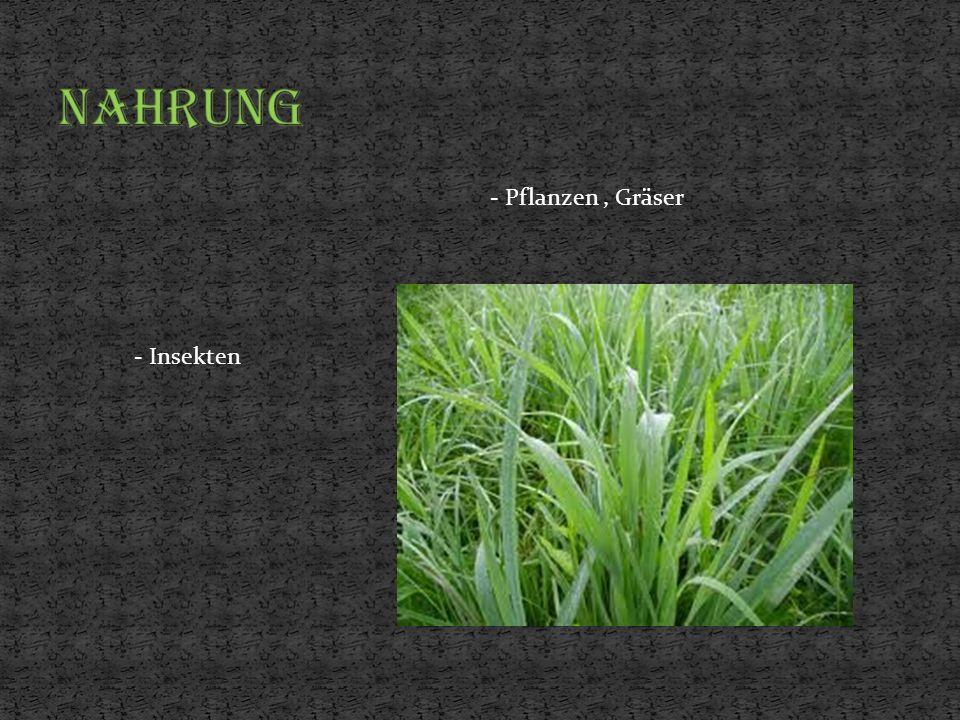- Pflanzen, Gräser - Insekten
