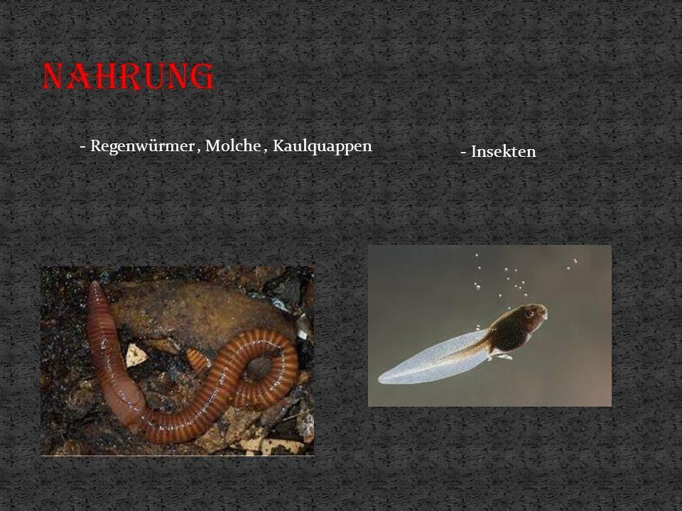 - Regenwürmer, Molche, Kaulquappen - Insekten