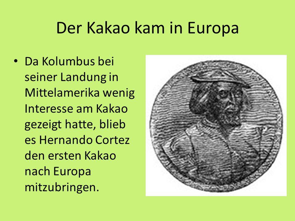 Der Kakao kam in Europa Da Kolumbus bei seiner Landung in Mittelamerika wenig Interesse am Kakao gezeigt hatte, blieb es Hernando Cortez den ersten Kakao nach Europa mitzubringen.
