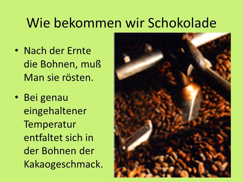 Wie bekommen wir Schokolade Nach der Ernte die Bohnen, muß Man sie rösten.