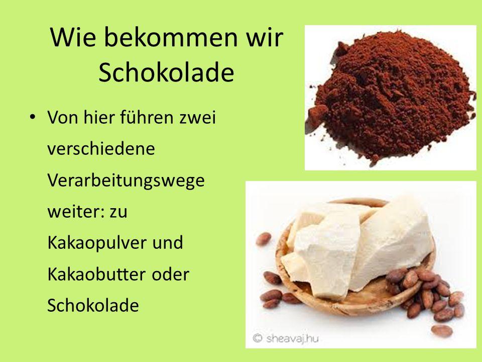 Wie bekommen wir Schokolade Von hier führen zwei verschiedene Verarbeitungswege weiter: zu Kakaopulver und Kakaobutter oder Schokolade